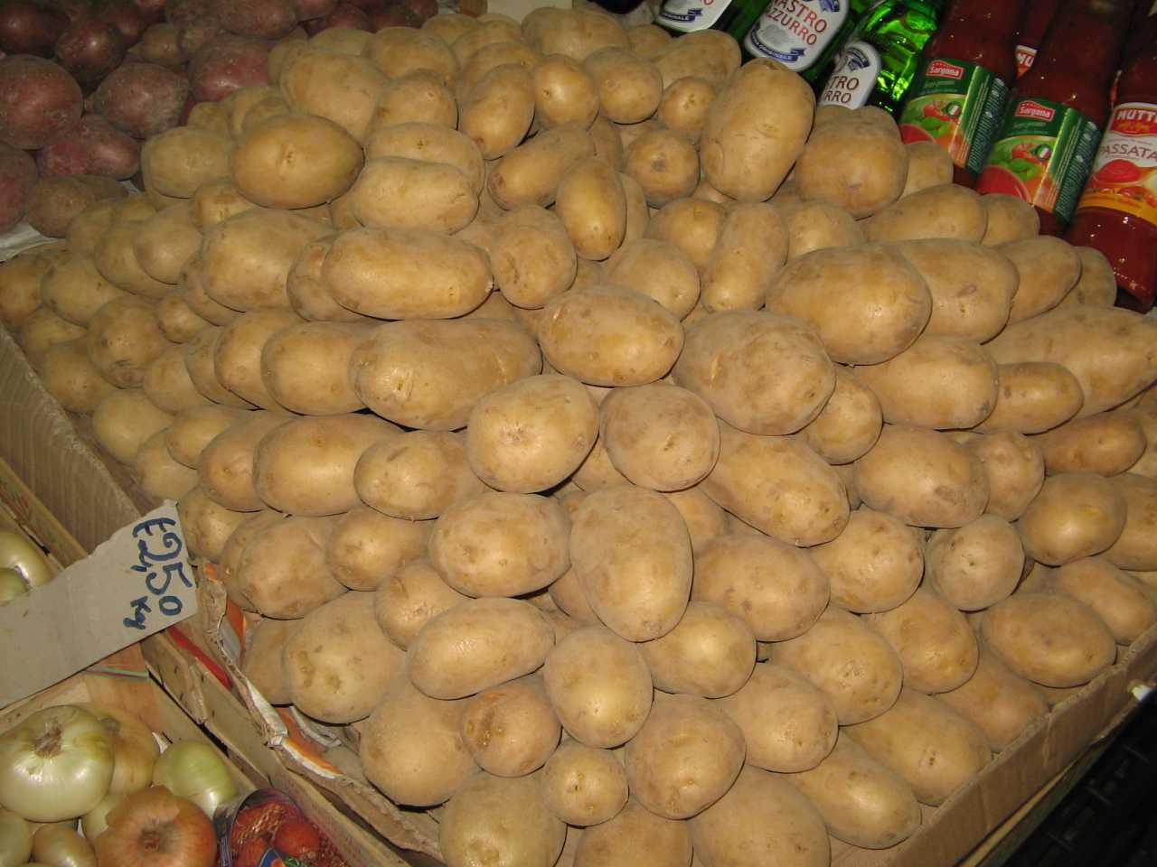 Sempre buone le patate cibimbo for Quando raccogliere le patate