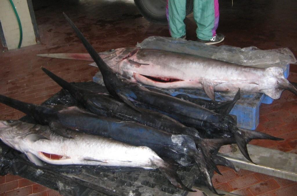 3) Se non ha mangiato pesce a scuola, introdurre almeno 2-3 sere alla settimana (Prof. Caramia)