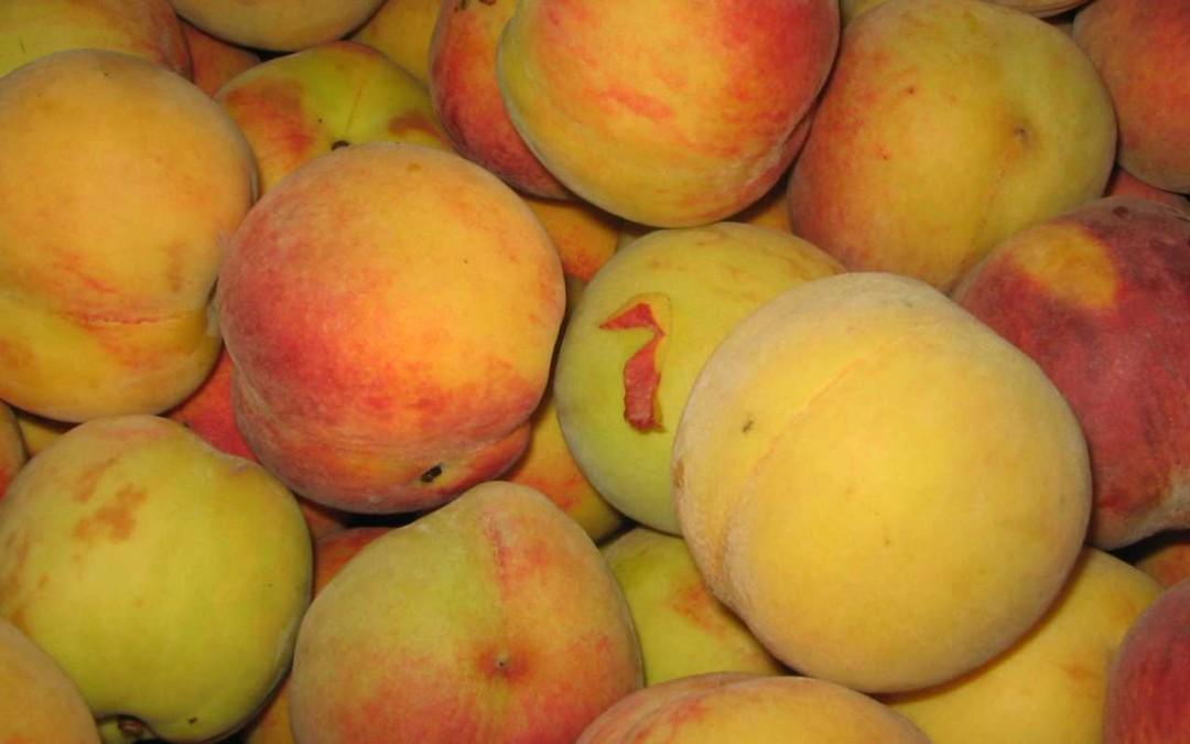 9) Consumare almeno 3 porzioni al giorno di frutta fresca (Prof. Caramia)