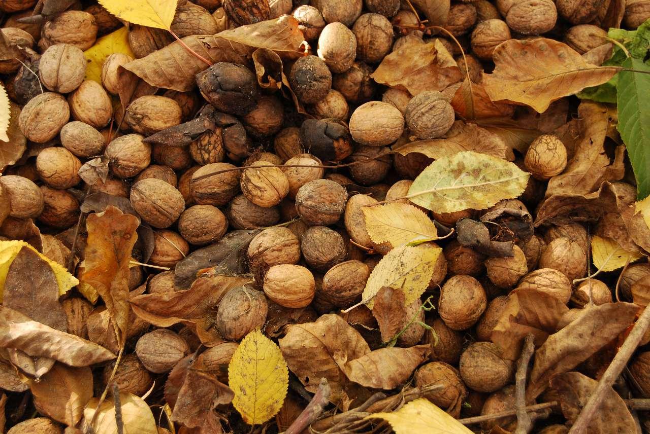 Mandorle, noci, frutta secca a volontà