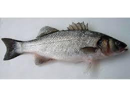 proteine-del-pesce