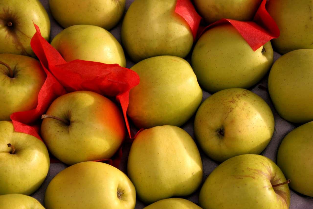 Adotta un albero: melo, pesco, o…