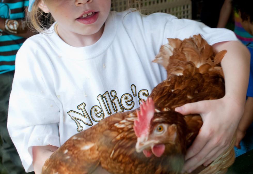 La gallina, anzi no, tre galline da adottare