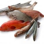 Varietà-di-pesci-