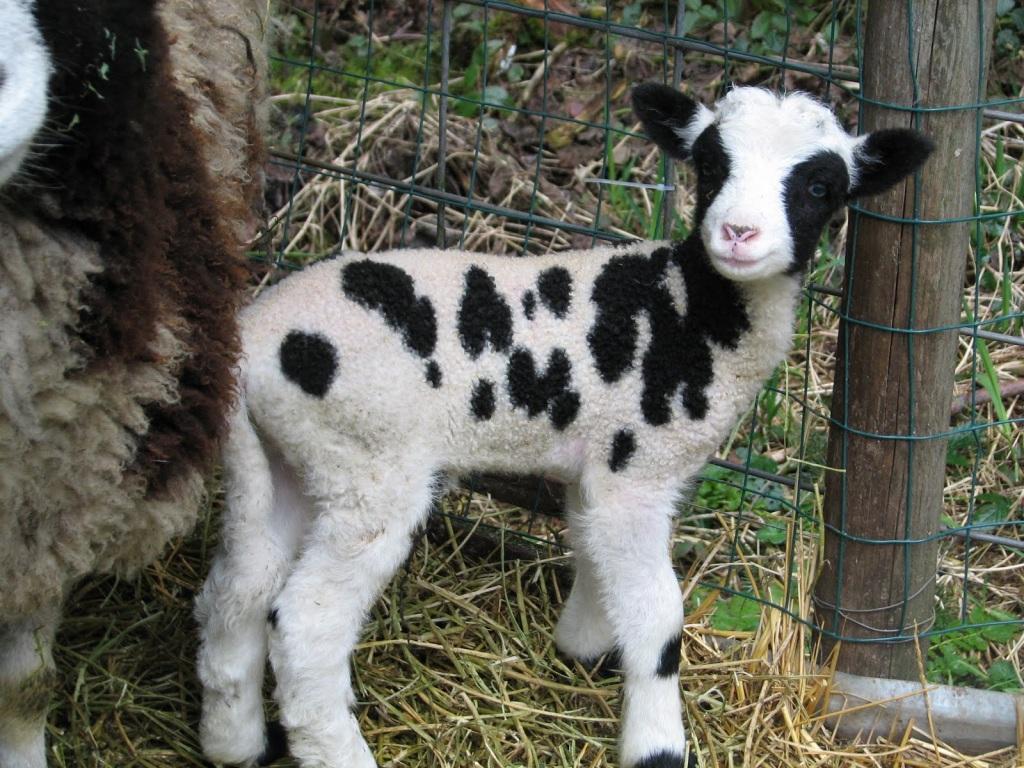 Pasqua-senza-agnello