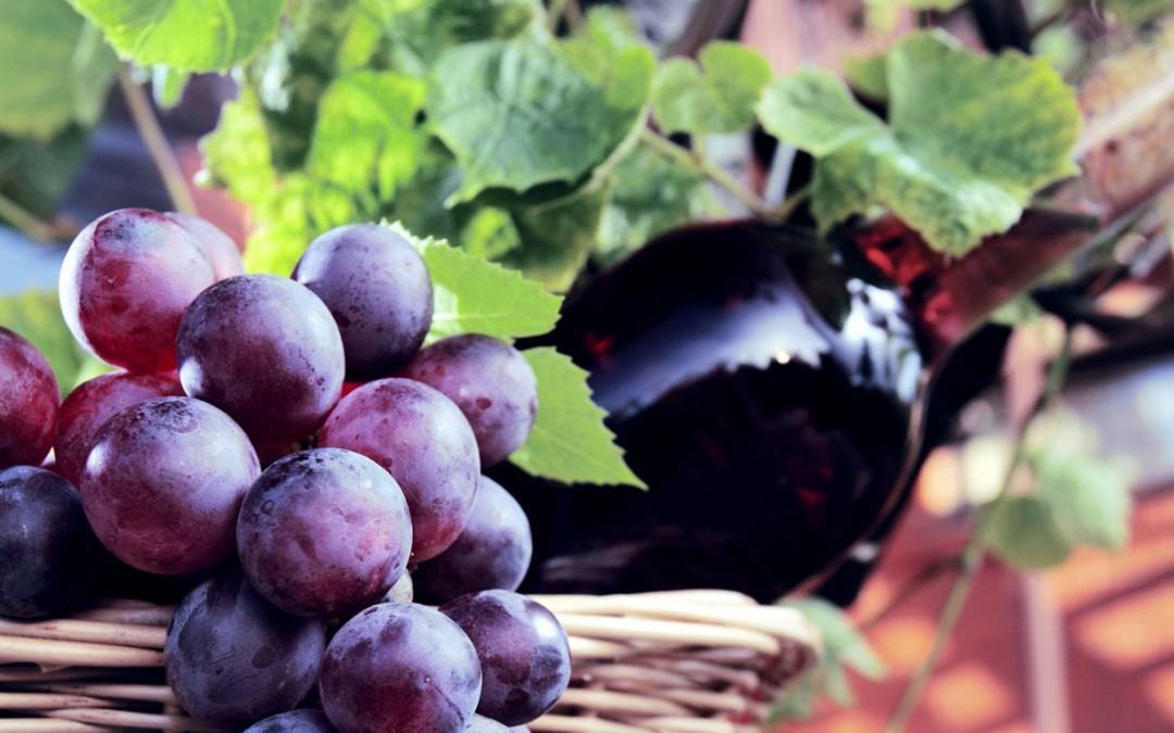 Vino e di vino