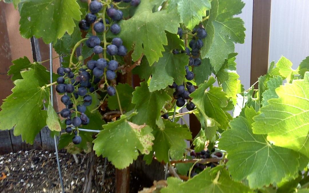 madre Terreno e padre Clima: il vino perfetto