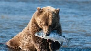 orso-pescato-pesce