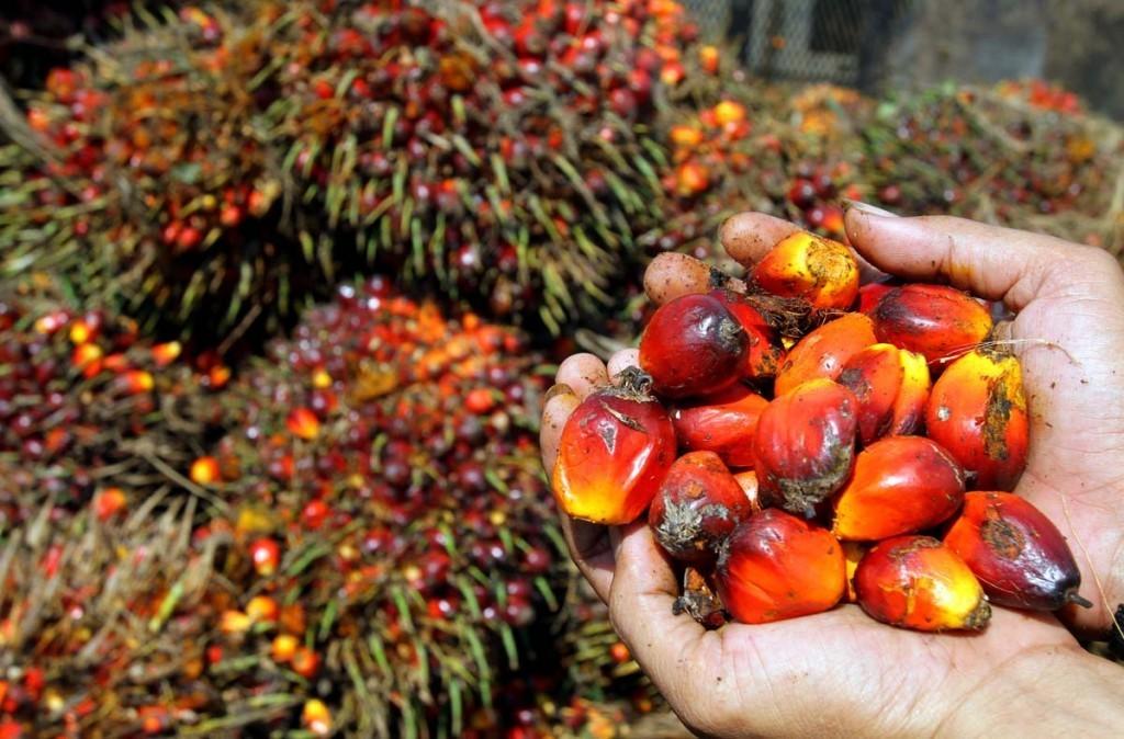 Mamme e Plasmon: una petizione per chiedere di eliminare l'olio di palma. Perché?