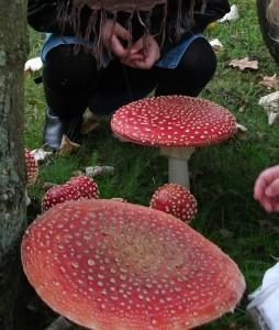 funghi-velenosi