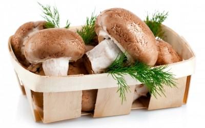 Funghi: a che età i bambini possono mangiarli?