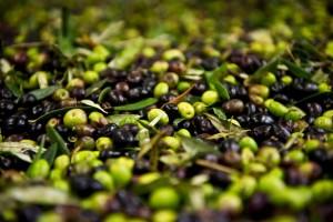 L'olio-extra-vergine-d'oliva