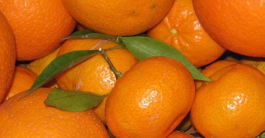Frutta-di-stagione-arance-e-mandarini