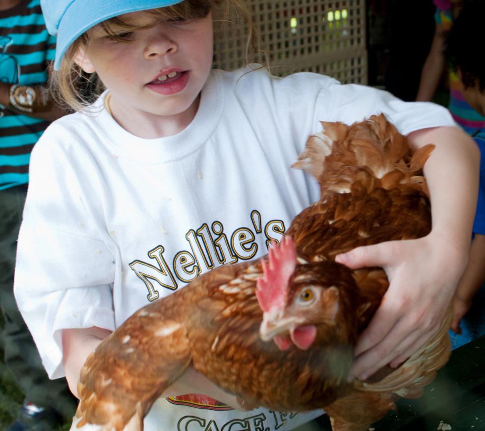 adotta-una-gallina
