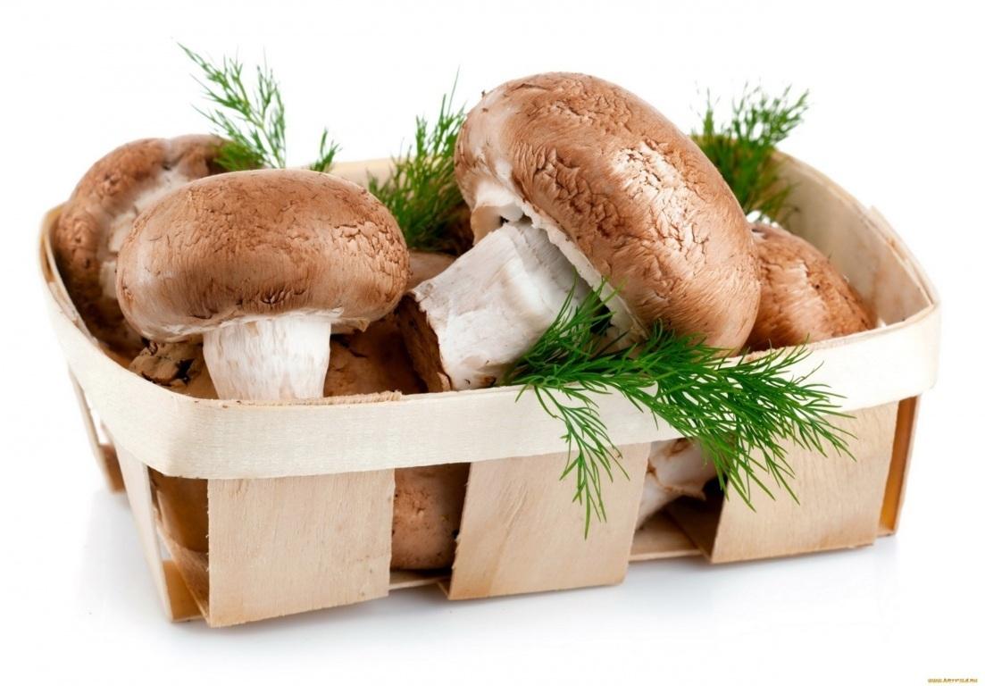 Funghi a che et i bambini possono mangiarli cibimbo - Ricette che possono cucinare i bambini ...