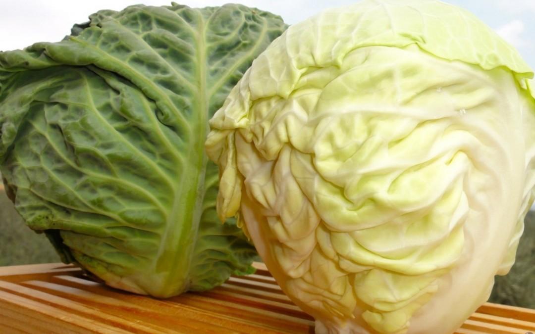 Cavoli e broccoli: ricchi di proprietà